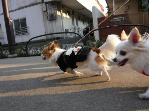 1犬身のリード